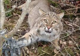 Secret 39 federal agency admits killing 3 2 million wild animals in