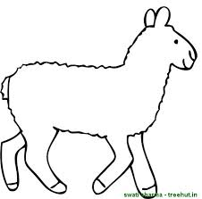 rakhi coloring pages sheep coloring pages