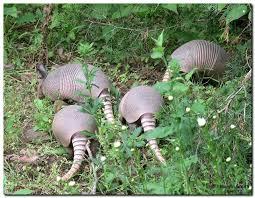 Arkansas wildlife images 27 best arkansas wildlife images arkansas wildlife jpg