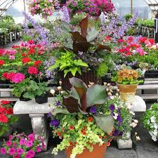 brightly colored plantings in container gardening container