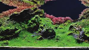 Aquascape Malaysia Previous Years U0027 Contest 2017 Iiac Aquascaping Contest
