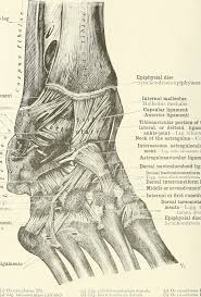 Ankle Anatomy Ligaments File An Atlas Of Human Anatomy For Students And Physicians 1919