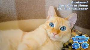 cute cat halloween wallpaper awakened cute cat at home android apps on google play