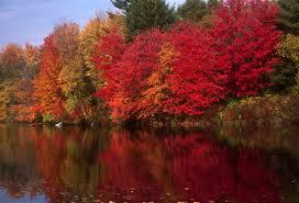 7 day new england fall foliage tour white mountain route boston