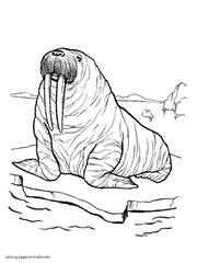 coloring page for walrus sea and ocean animals coloring pages