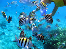 New Mexico snorkeling images The most amazing places for snorkeling and diving in mexico jpg