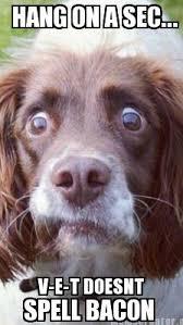 Dog At Vet Meme - my dog hates the v e t meme guy