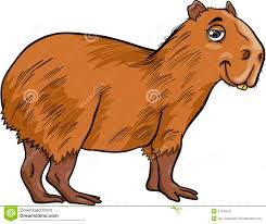 capybara animal coloring pages free capibara page vitlt com