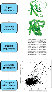 computational protein design quantifies structural constraints on