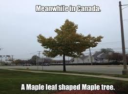 Tree Puns Puns Trees Puns Pun Pictures Cheezburger