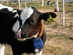 animal identification wikipedia