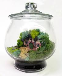 8 best cool terrariums and indoor gardening ideas images on pinterest