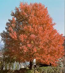 faq trees shrubs