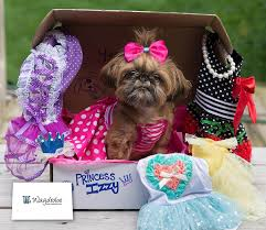 petco black friday 21 black friday u0026 cyber monday deals for dog lovers u2013 iheartdogs com