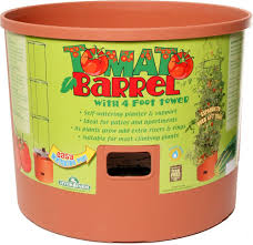 hydrofarm tomato barrel very simple hydroponic tomato growing system