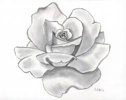 drawn red rose pencil shading pencil and in color drawn red rose