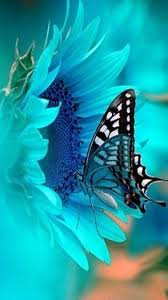 beautiful butterfly pictures photos and images for