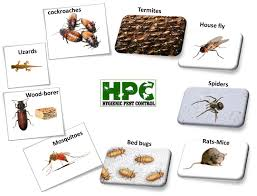 house pest control hygienic pest control and maintenance services