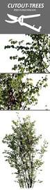 the 25 best deciduous trees ideas on pinterest identification