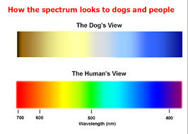 Cause Of Colour Blindness Can Dogs See Colors Psychology Today