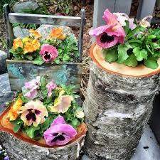 856 best container hanging container images on pinterest flower