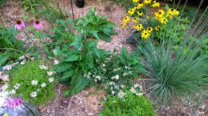native plant sale home page