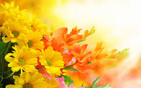 Yellow Orange Flowers - wallpapers tagged with flowers