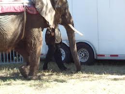 how you can help stop elephant abuse peta