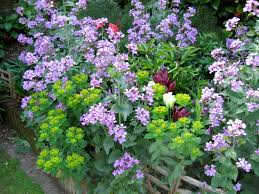 Cottage Garden Ideas Pinterest by Bestplantsforcottagegarden Small Backyard Ideas Pinterest