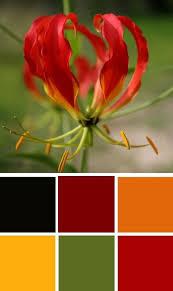 Autumn Color Schemes 5135 Best Color Palette Images On Pinterest Colors Color