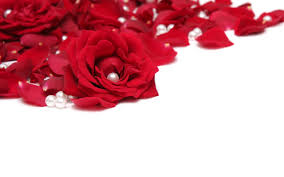 buy valentines day flowers online to express love messages
