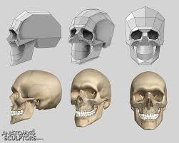 Human Anatomy Reference 12 Best Anatomy Tips U0026 Tricks Images On Pinterest Anatomy
