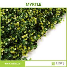 broad leaf ivy climbs a natural willow branch trellis expandable