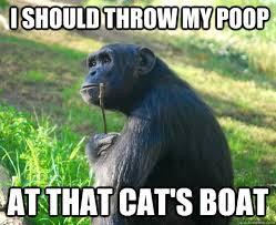 Chimp Meme - i should throw my poop at that cat s boat contemplative chimp