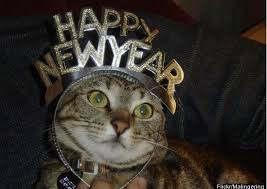 Happy New Year Cat Meme - happy new year sluniverse forums