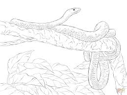 eastern green mamba on a tree coloring page free printable