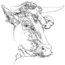 cow sketch stock photography image 22858062
