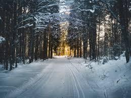 winter pictures pexels free stock photos
