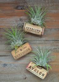 50 creative diy projects using cork air plants cork and magnets