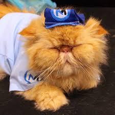 Halloween Costumes Cats Diy Cat Costumes Popsugar Smart Living