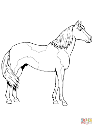 paso fino horse coloring page free printable coloring pages