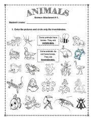 free printable worksheets vertebrates invertebrates english teaching worksheets invertebrates