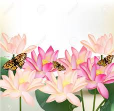 vector pink lotus flowers on white background for design