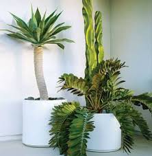 10 Best Houseplants To De by 50 Plants That Clean The Air Our House Plants