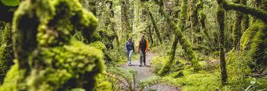 walking hiking new zealand