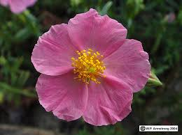 flower terminology part 1