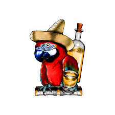 cartoon tequila tequila parrot decal full color drinking parrot sticker