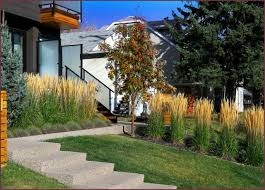 138 best ornamental grasses images on ornamental