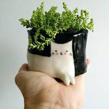 small potted plants small potted plants cat pot plant small by on buy small potted