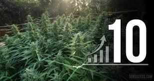 homebox chambre de culture 10 astuces pour optimiser votre espace de culture de cannabis